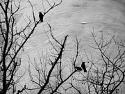 Winter Prints Photos - Black Birds by Kathy Jennings