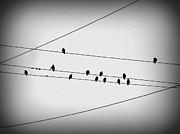Black Birds Waiting Print by Stephanie Hollingsworth