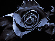 Ym_art Prints - Black Blue Rose Print by Yvon -aka- Yanieck  Mariani