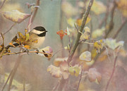 Little Bird Posters - Black-capped Chickadee Poster by Angie Vogel