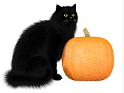 Corey Ford - Black Cat and Pumpkin