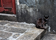 Animal Pics Prints - Black Cat in the Alley Print by John Rizzuto