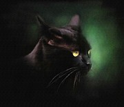 Watercolor Cat Print Posters - Black Cat Poster by Robert Foster