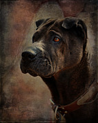 Dignified Prints - Black Chinese Shar-Pei Print by Terry Fleckney