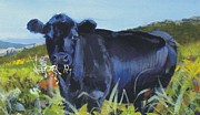 Mike Jory Cow Posters - Black cow grazing on a hill side Poster by Mike Jory