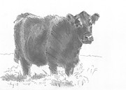 Black Angus Drawings Prints - Black Cow Pencil Sketch Print by Mike Jory