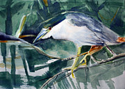 Randy Bell - Black-crowned Night Heron