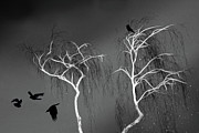 Richard Piper Metal Prints - Black Crows - White Trees  Metal Print by Richard Piper