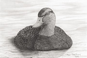 Calm Waters Originals - Black Duck by Paul Treadway