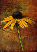 Justice Digital Art Framed Prints - Black Eyed Susan Framed Print by Elena Nosyreva