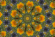 Mandala Photos - Black Eyed Susan Mandala #1 by Beth Sawickie