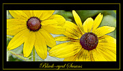 Disk Flowers Framed Prints - Black Eyed Susan Poster Framed Print by A Gurmankin