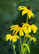 Black-eyed Susan Prints - Black Eyed Susans dark background 2 Print by Sharon Freeman