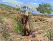 ACE Coinage painting by Michael Rothman - Black-footed Ferret