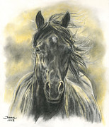 Equine Portrait Framed Prints - Black Gold Framed Print by Jana Goode