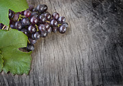 Grapevine Red Leaf Photo Prints - Black grapes Print by Mythja  Photography