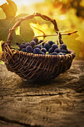 Vino Photos - Black grapes by Mythja  Photography