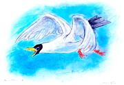 Chalk Drawing Metal Prints - Black-headed Gull - Chroicocephalus ridibundus Metal Print by Kurt Tessmann