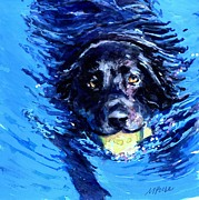 Water Retrieve Framed Prints - Black Lab  Blue Wake Framed Print by Molly Poole