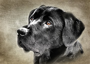Eleanor Abramson - Black Lab Portrait