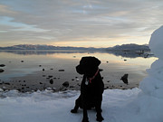 Heather Lavoie - Black Lab Tahoe