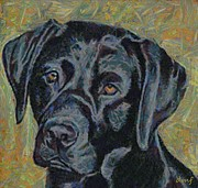 Labrador Mixed Media Framed Prints - Black labrador Framed Print by Dragica  Micki Fortuna