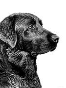 Labrador Retrievers Prints - Black Labrador Retriever Dog Monochrome Print by Jennie Marie Schell