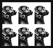 Labrador Retrievers Prints - Black Labs in a Row  Print by Jennie Marie Schell