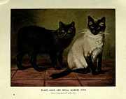 Pussy Framed Prints - Black Manx and Royal Siamese Cats Framed Print by W Luker