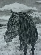 Western Drawings - Black mustang valley -wild hosre by Lucka SR