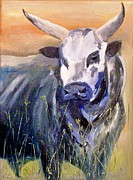 Paul Bokvel Smit - Black Nguni 2