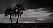 Featured Digital Art Originals - Black Palms by Michael Thomas