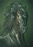 Horse Images Pastels Framed Prints - Black Pearl- fresian stallion Framed Print by Dorota Zdunska