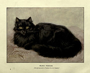 Persian Illustration Prints - Black Persian Print by Henrietta Ronner