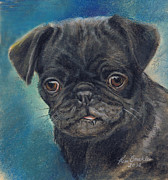 Kim Pastels Framed Prints - Black Pug Framed Print by Kim Brecklein