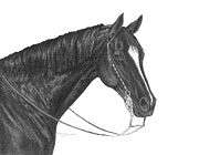 Horse Drawings Prints - Black Quarter Horse Print by Rulan Capper-Starr