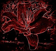 Susan Saver - Black Red Lilly