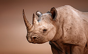 Black Rhinoceros Portrait Print by Johan Swanepoel