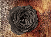 Stillife Mixed Media - Black rose  by Dagmar Wassenberg