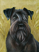 Miniature Schnauzer Paintings - Black schanuzer by Tobiasz Stefaniak