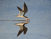 Stan Tenney - Black Skimmer
