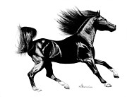 Mare Drawings - Black Speed by Kayleigh Semeniuk