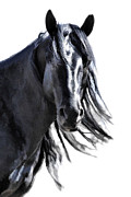 Athena Mckinzie - Black Stallion