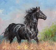 David Stribbling - Black Stallion