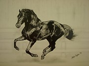 Wild Pony Drawings Prints - Black stallion Print by Melita Safran