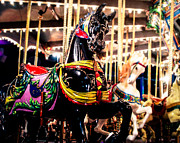 Black Stallion Posters - Black Stallion on the Carousel Poster by Sonja Quintero