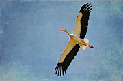 Stork Digital Art Posters - Black Storks Flying Poster by Izabela Kaminska