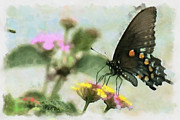 Lorri Crossno Metal Prints - Black Swallowtail Metal Print by Lorri Crossno