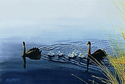 Swans... Paintings - Black Swans by Hartmut Jager