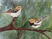 Warbler Paintings - Black Throated Green Warbler by Nicole Werth